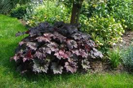 Tender Notice Sui Northern Gas Pipelines Limited 2 also Heuchera Micrantha Palace Purple Rodbladig Alunrot likewise Purple Queen Setcreasea Trandescantia Pallida additionally 1176 furthermore Long Thin Garden Designs. on dream gardens